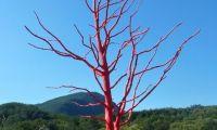 crveno-stablo-5